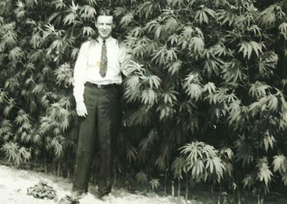 geschiedenis cannabis