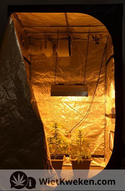wiet kweken binnen tent