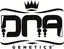 DNA Genetics Cannabis Seeds