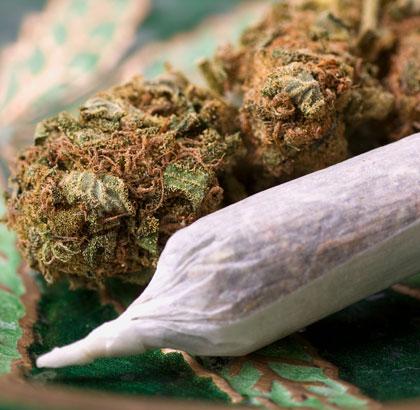 Het effect van Amnesia Haze na het roken of vaporiseren is zeer krachtig.