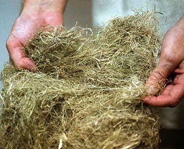 Hier zie je een afbeelding van hennep vezels. Je ziet duidelijk de draadachtige structuur die zeer sterk is
