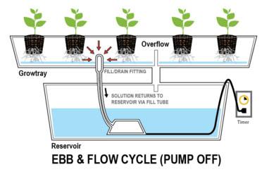 hydro kweken overzicht