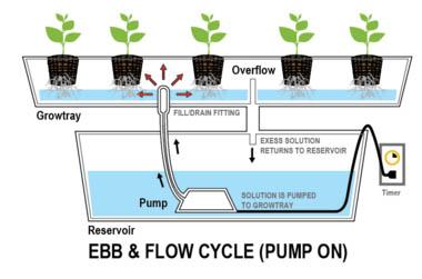 Kweken op hydro