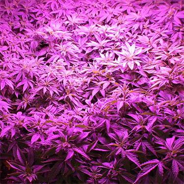 led verlichting binnen kweken