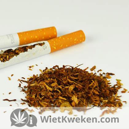 joint draaien van sigaret