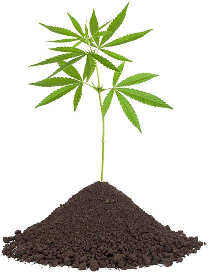 wiet kweken op aarde