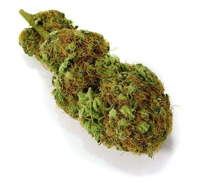 Wiet (weed) top