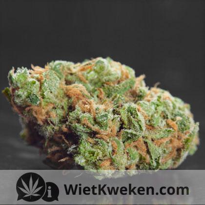 Wiet (weed)