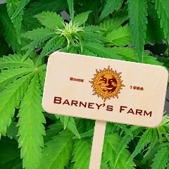 Zaadbank: Barneys Farm Seed Bank